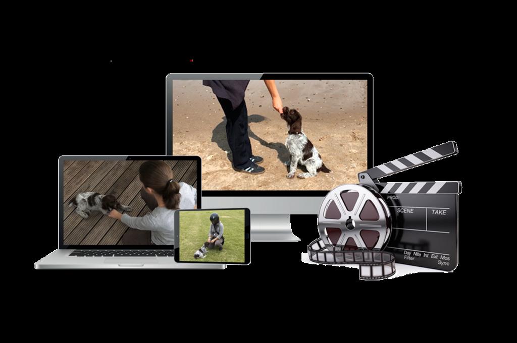 Startrampe für Welpen - Erfahrungen mit dem Videokurs für Welpen