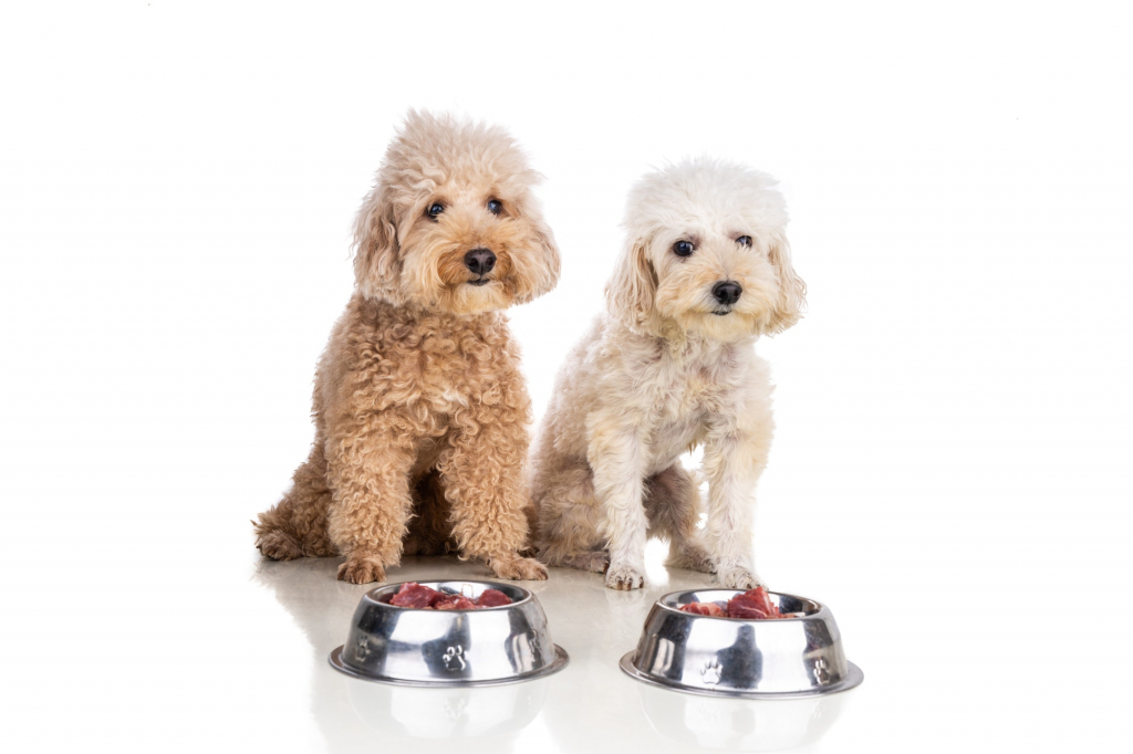 Obedient healthy dogs posing with barf raw meat, fish, vegetable, eggs, ingredient diet on white